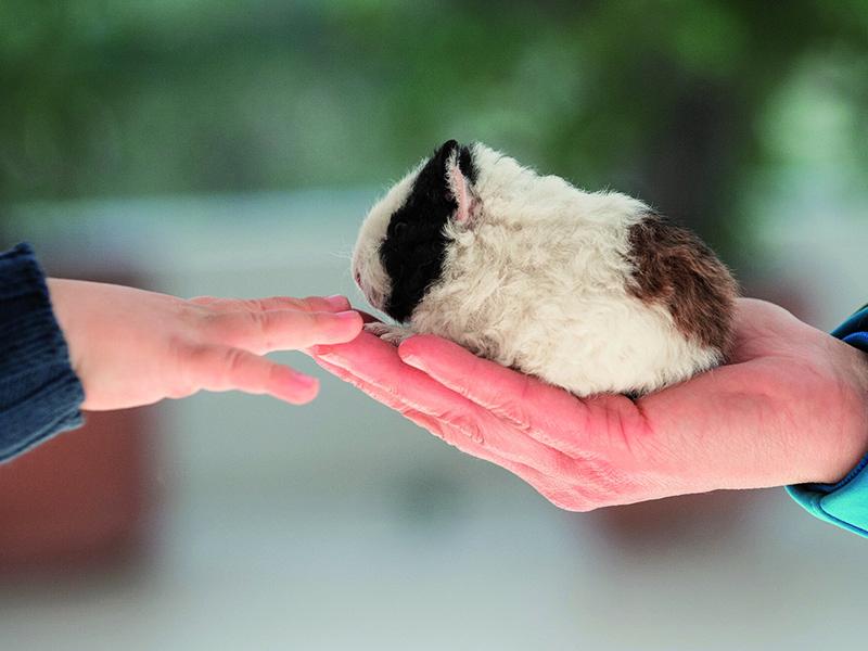 Infermieri e Pet Therapy: un corso per diventare esperti nel settore