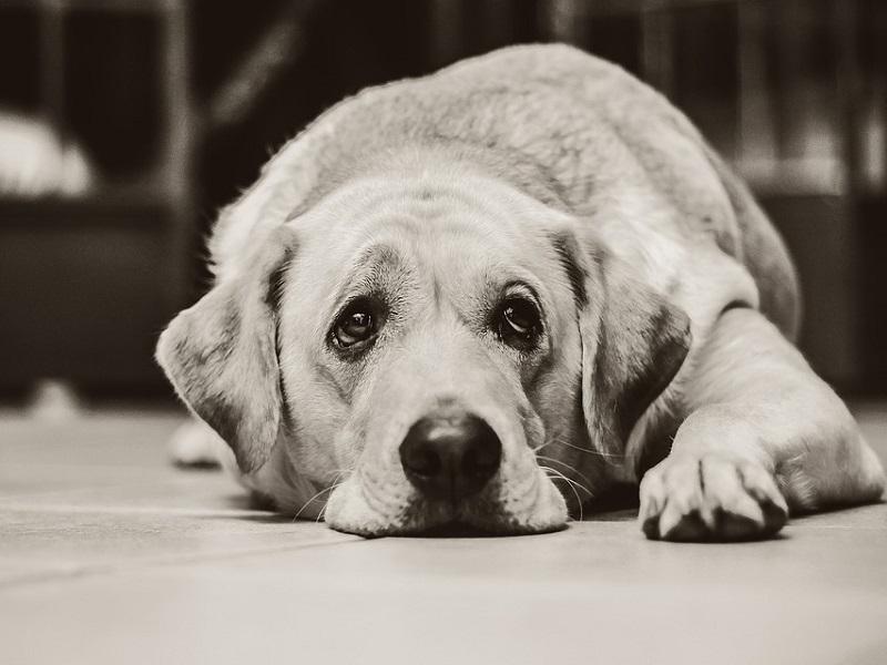 Sperimentazione su animali: i dati sono spaventosi!