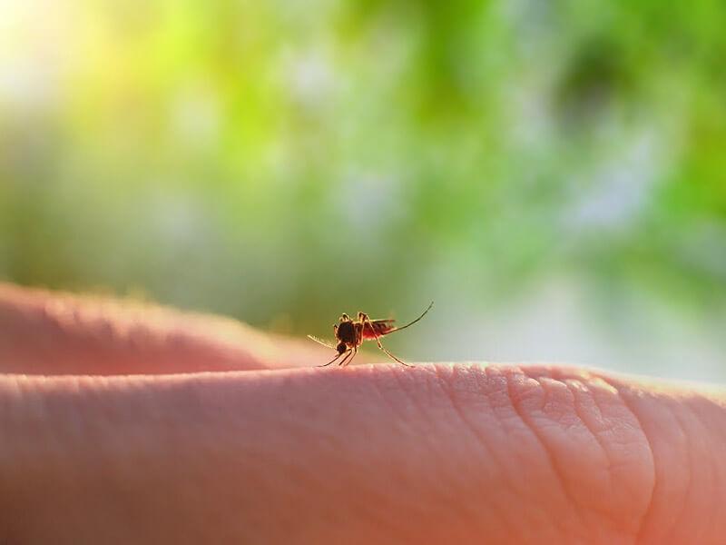 Dengue in toscana: usl centro al lavoro!