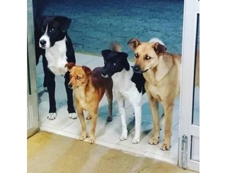 I 4 fedeli compagni del senzatetto!