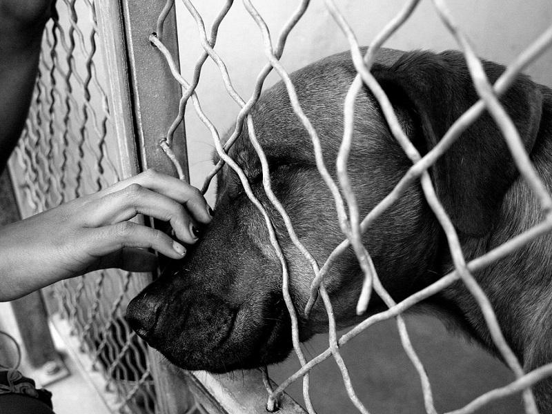 Adotta il cane di un paziente terminale