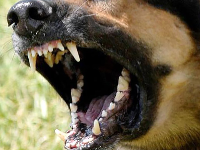 Lavoratore di sala operatoria aggredito da cani randagi fuori da ospedale. Oss lo salva.