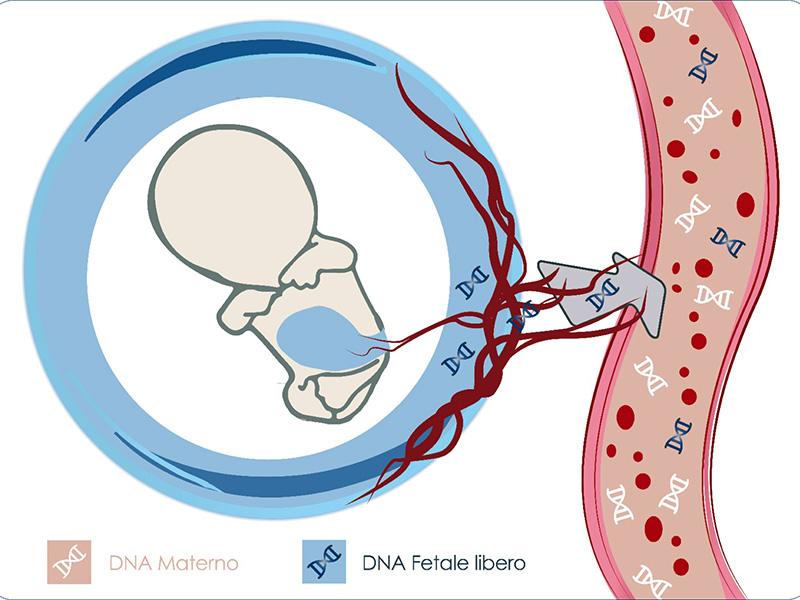DNA fetale: facciamo chiarezza.