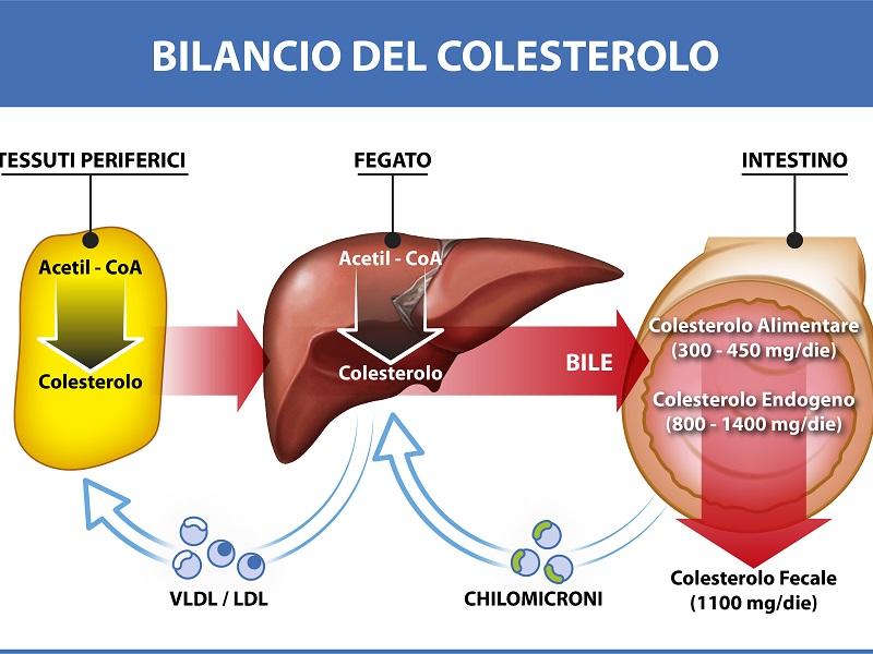 Colesterolo: linee guida per prevenire le malattie cardiovascolari.