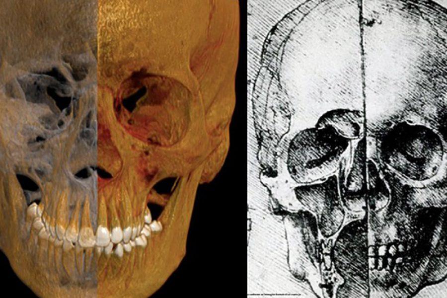 Leonardo Da Vinci meglio di una TAC: ecco i suoi disegni del corpo umano.