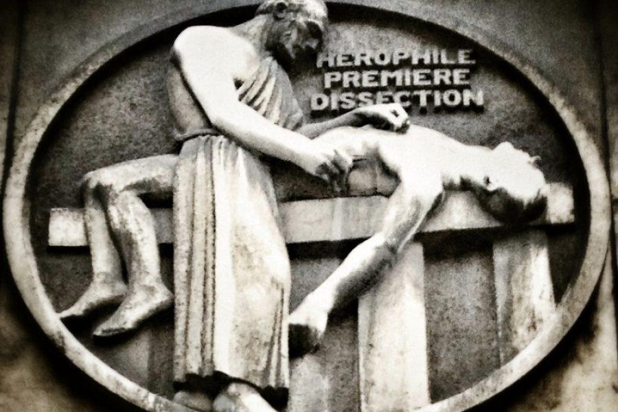 Erofilo, medico greco dedito alla dissezione