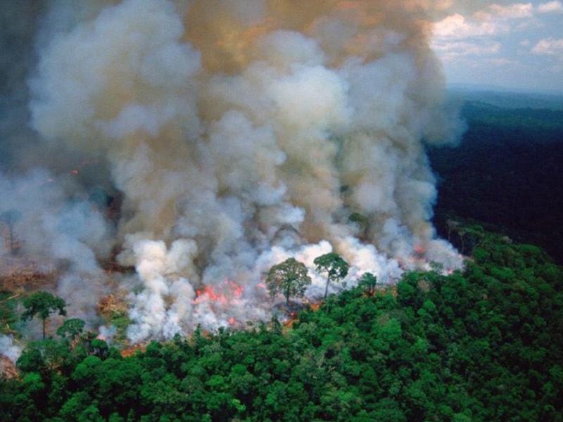 Rainforest Trust: come salvare l'Amazzonia…dall'Italia!