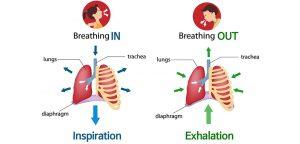 respiro, respirazione, inspirazione, espirazione, polmoni