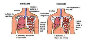 respiro, respirazione, polmoni