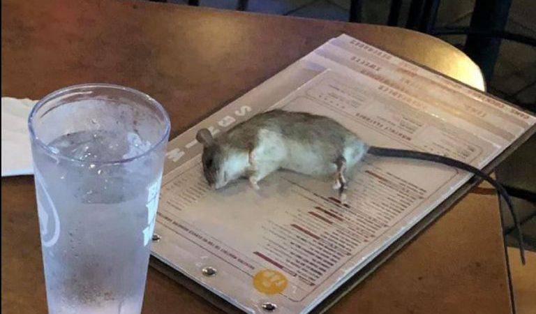 Topo cade dal soffitto e finisce sul tavolo di un ristorante. Clienti scappano e denunciano.
