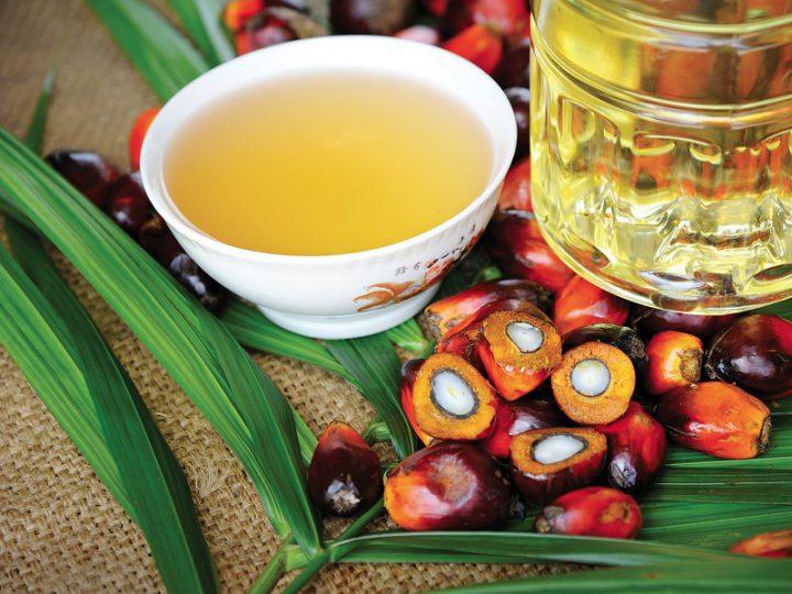 Alimentazione: Olio di Palma, la Scienza non ha certezze!