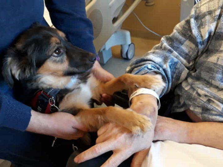 Paziente post Ictus: ritrova la parola in ospedale grazie al proprio cane!