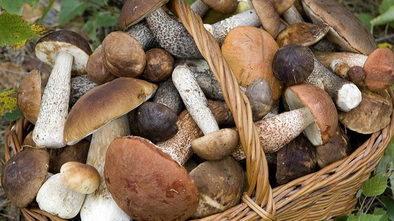 Funghi: quali sono buoni da mangiare? Raccomandazioni ASL.