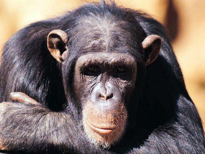 """Infermiera aggredita da un OSS di colore per colpa di una scimmia: """"non volevo offenderlo""""."""