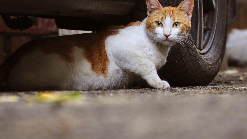 Gatti in Ospedale: Infermieri e Oss si organizzano. E le Aziende?