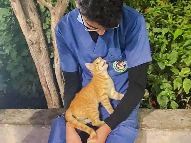 gattino infermiere egitto