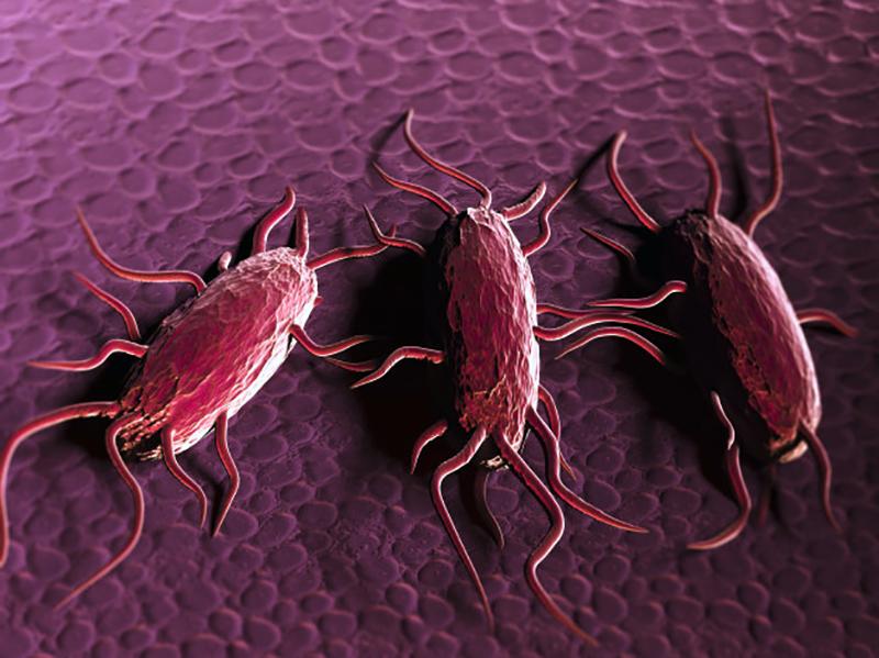 Listeria Monocytogenes, agente infettivo che provoca la Listeriosi.